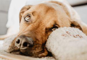 Perros con leptospirosis: lo que debes saber para que tu mascota no te contagie
