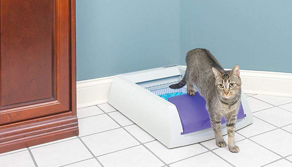 Las 4 mejores cajas de arena autolimpiantes para gatos que podrás conseguir en Amazon