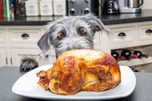 9 sobras de Thanksgiving que NO debes darle a tu perro