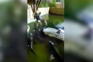 Video: Cae a una fosa llena de caimanes tras romperse una cuerda durante un show