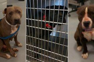 Mujer está grave en el hospital tras ser atacada por tres perros