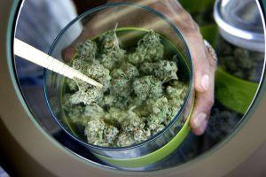 En medio de ventas bajas, aprueban entrega de marihuana a domicilio en todo California