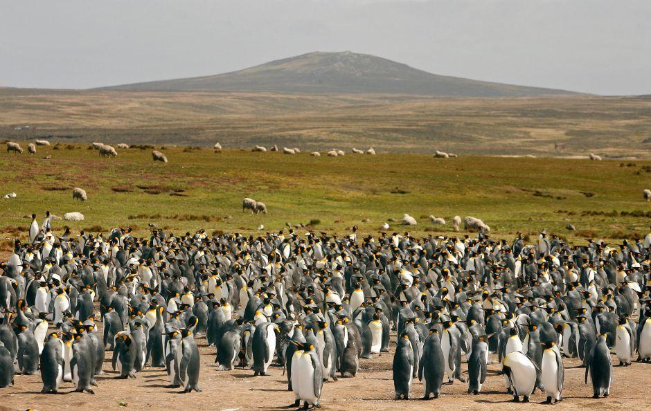 Se vende isla habitada por miles de pingüinos