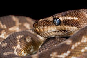 Fotos: Una serpiente escondida en el inodoro le mordió el trasero