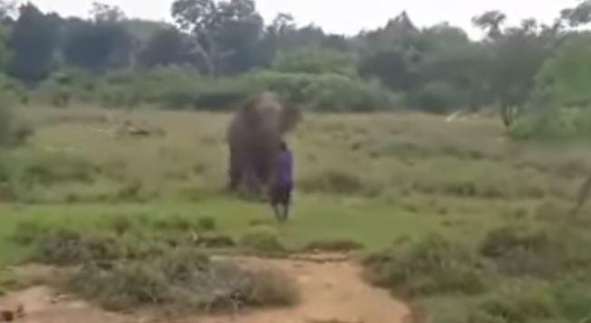 Elefante mata a hombre que trató de hipnotizarlo
