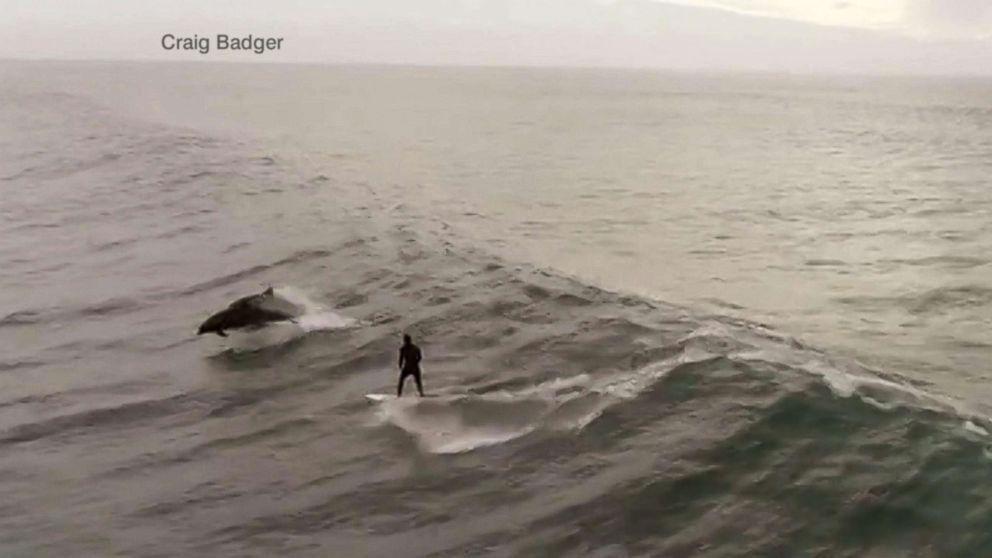 Video: Surfeando con delfines