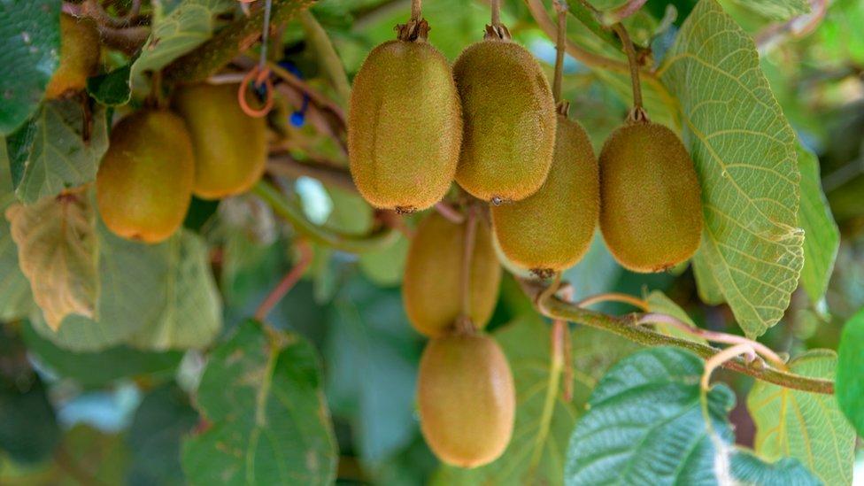 El kiwi es una de las frutas que podría verse afectada.