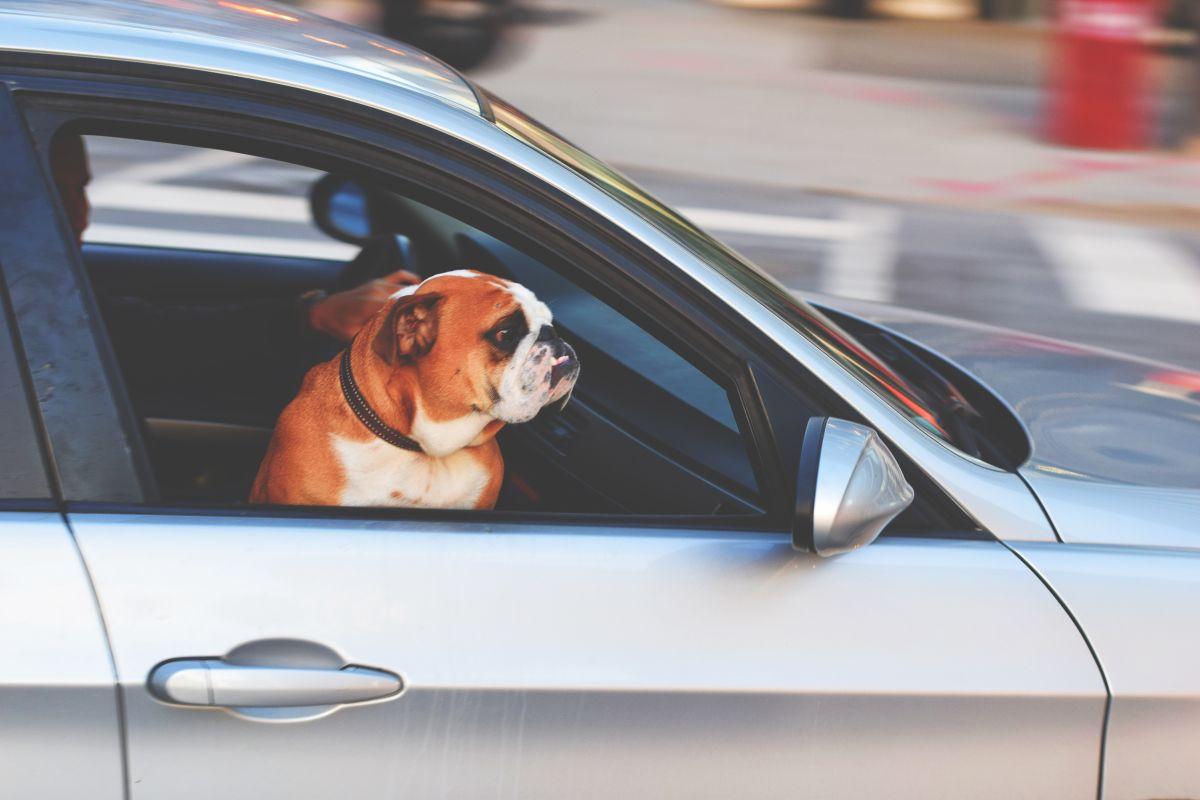 ¿Qué es el 'Dog Mode' y por qué Tesla quiere implementarlo?