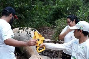 Hallan una ballena de diez toneladas en plena selva del Amazonas