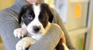 Aprovecha la adopción de mascotas durante este fin de semana