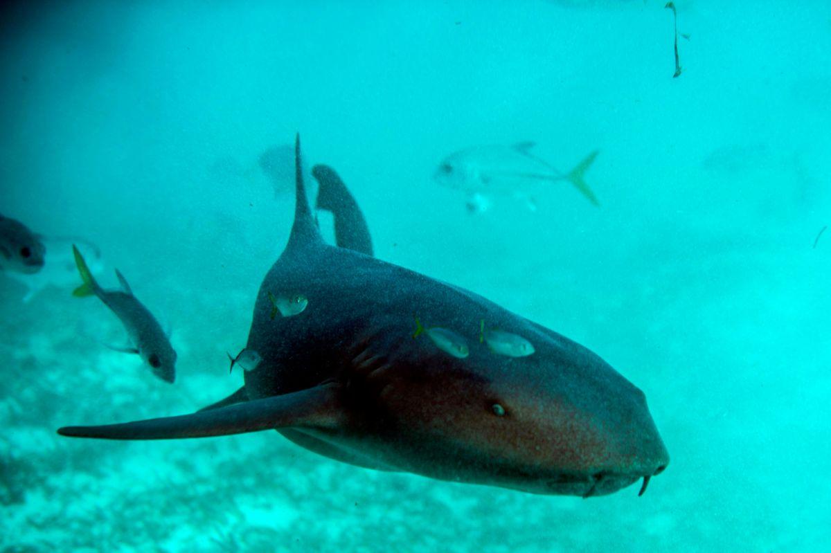 Adolescente de Carolina del Norte sobrevivió al ataque de un tiburón gracias a su padre