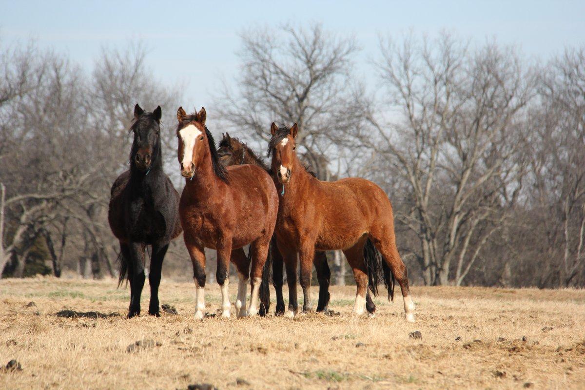 Estados Unidos ofrece $1,000 dólares por adoptar un caballo o un burro