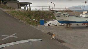 Perro interrumpe sesión de fotos de Google Street View