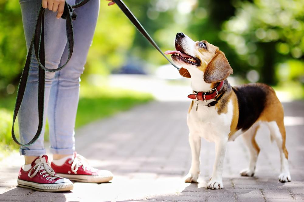 Los 5 mejores sets de collar y correa para pasear a tu perro