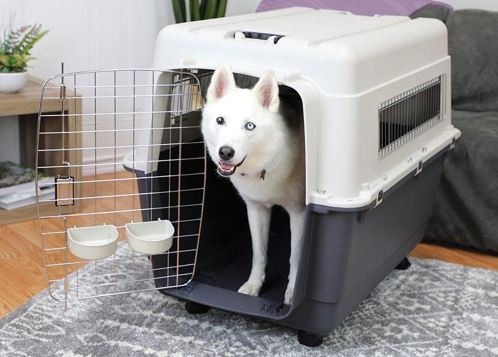 Las 6 mejores jaulas de viaje para que tu perro esté protegido y seguro