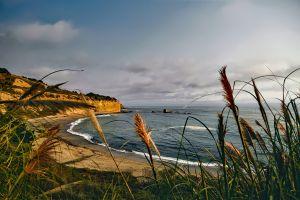 Latinos se unen para proteger playa silvestre contra la contaminación