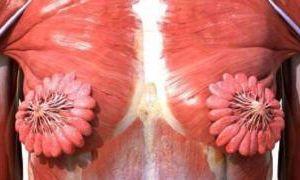 Si te creíste la foto viral de conductos mamarios, hay algo que debes saber…