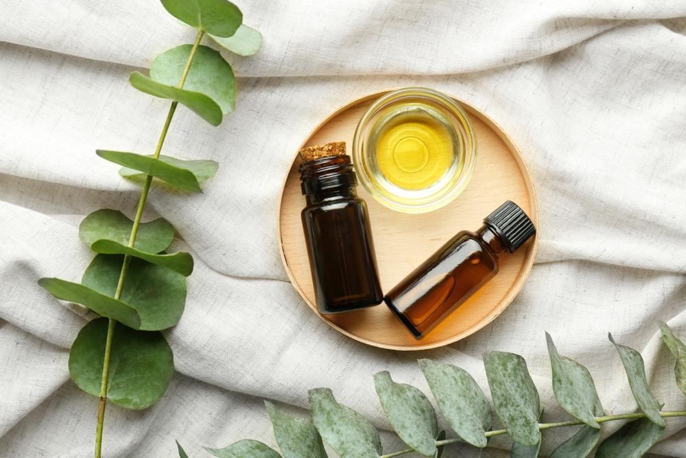 ¿Para qué sirve el aceite de eucalipto y cómo usarlo?