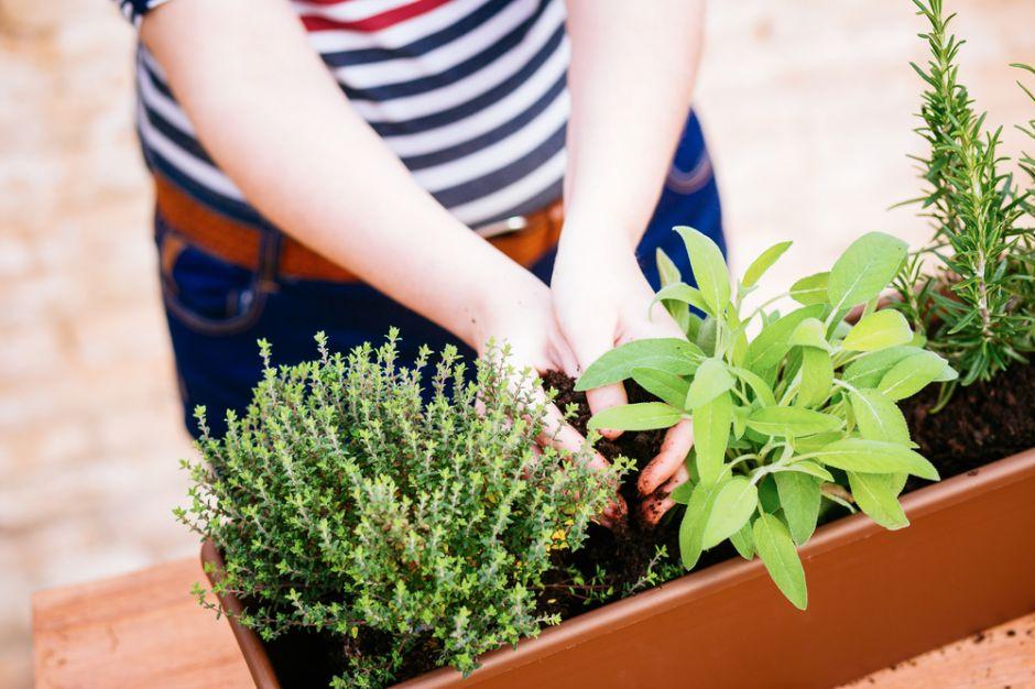 Cómo hacer un huerto orgánico en casa