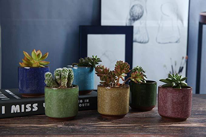 6 macetas para plantas suculentas que decorarán tu casa en primavera