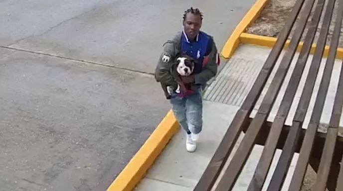 Un video de vigilancia de un estacionamiento muestra al adolescente con el cachorro,