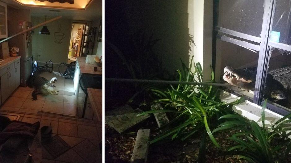 Mira la bestia que esperaba en la cocina de esta familia en Florida