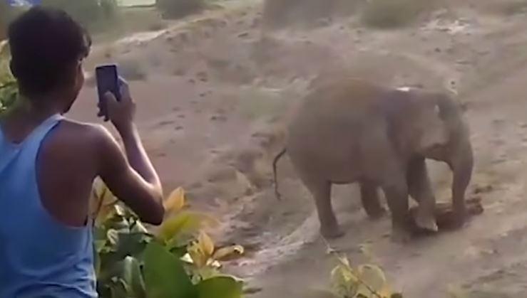 Elefante mata a hombre que apedreó a su cría