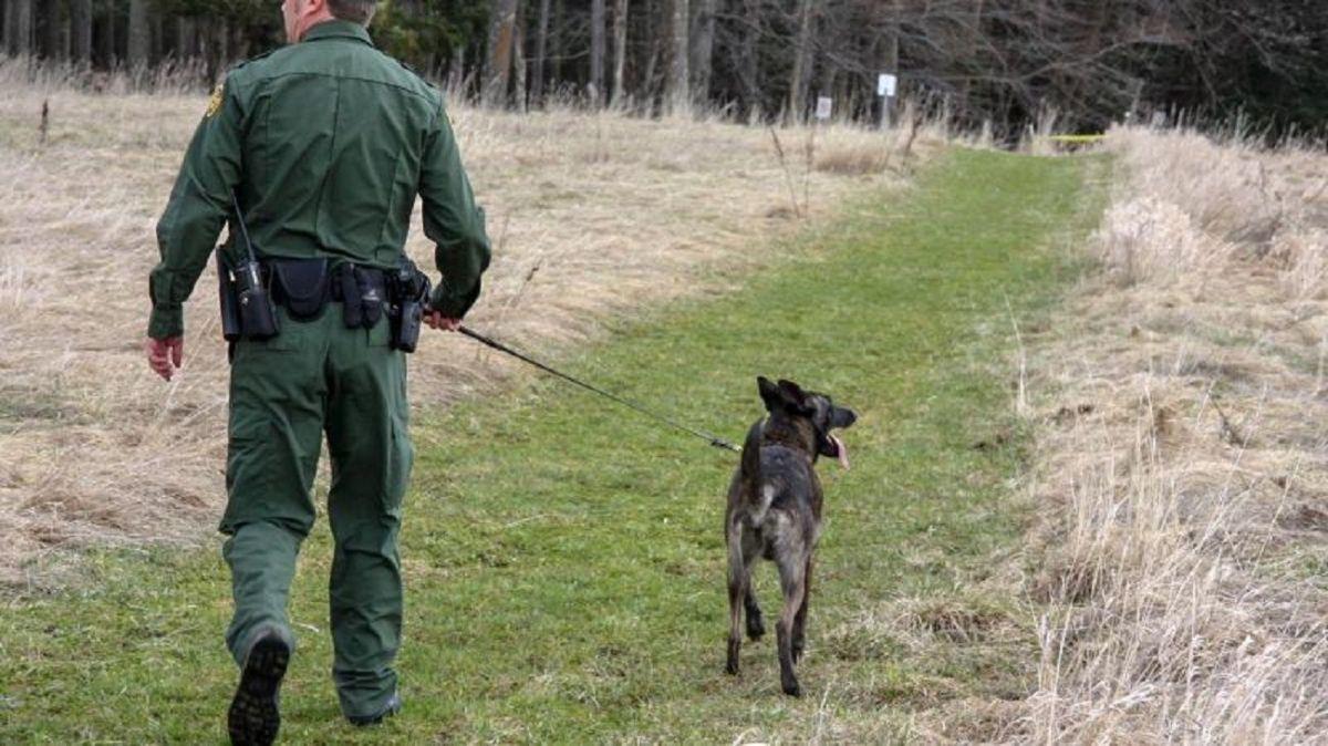 Equipo canino ayudó a detener a los inmigrantes.