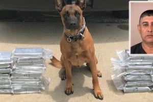 Perro policía intercepta cargamento de cocaína valorado en $1.4 millones
