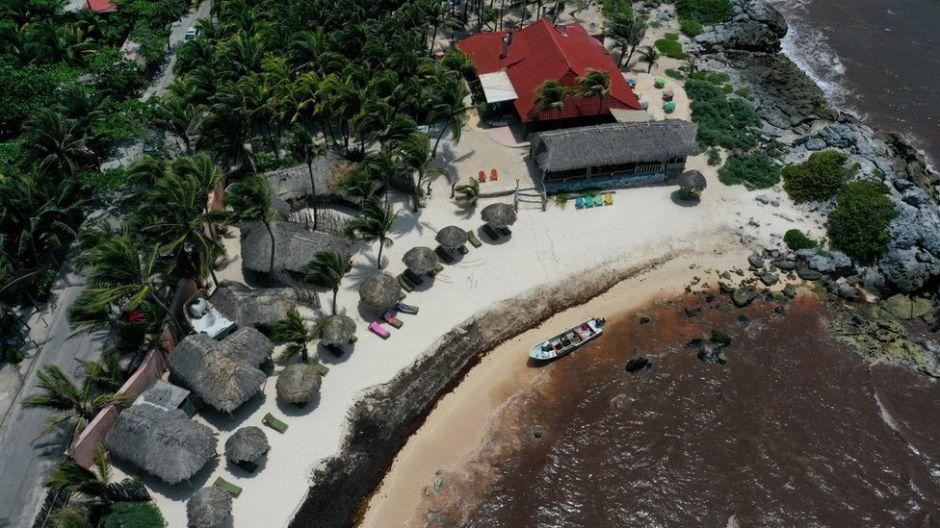 El desastre del sargazo: la marea de algas que invade el Caribe mexicano