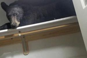 Encuentran a un oso durmiendo en el ropero