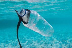 El plástico que comemos en los alimentos y el agua equivale a una tarjeta de crédito cada semana