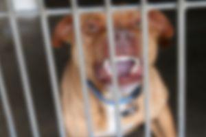 Un perro de 200 libras le muerde la cara cuando intenta besarlo