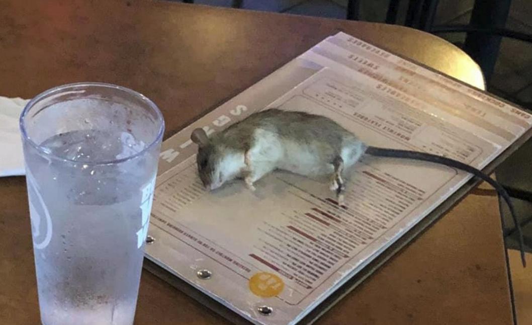 Una rata cayó del techo sobre el menú de una cliente en un restaurante de Los Ángeles