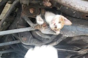 Rescatan a gatito que sobrevivió un viaje de 30 millas atrapado en un auto