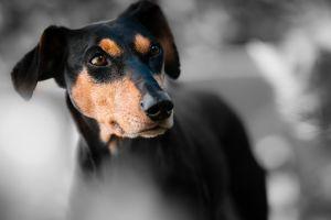 Mueren decenas de perros de albergues en Ecuador por alimento mezclado con veneno