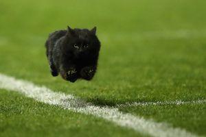 VIDEO: El gato que casi le quita el balón a André Pierre-Gignac