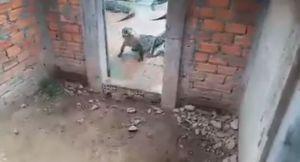 Muere niña de 2 años al ser devorada por cocodrilos que criaban sus padres en su casa