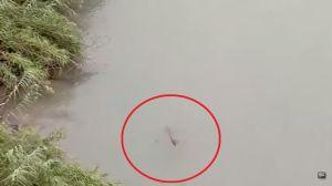 Un cocodrilo es una amenaza mortal para los migrantes que cruzan por el Río Grande