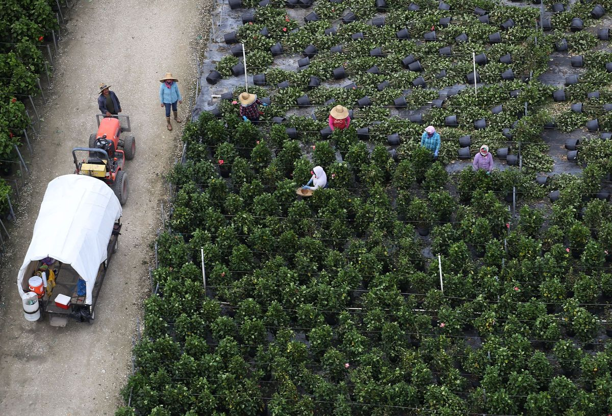 Inmigrantes agrícolas en alerta por deportaciones masivas