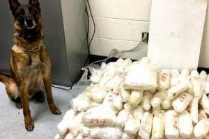 Perro policía de ICE ayuda a gran golpe al narco en la frontera con decomiso de $4 millones en droga