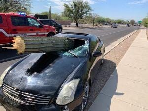 Conductor logra escapar ileso cuando un cactus saguaro le perfora el parabrisas