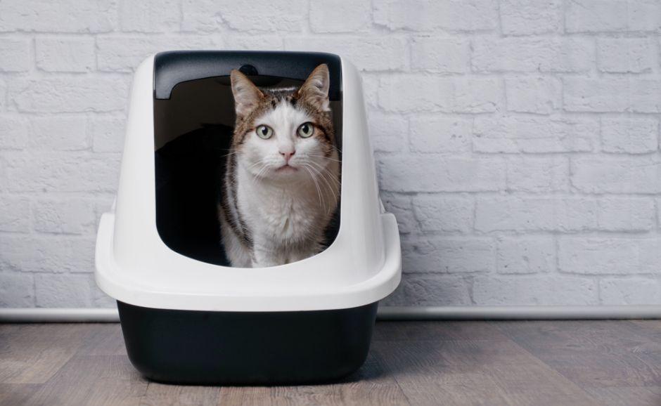 Las 5 mejores cajas de arena para gatos que son fáciles de limpiar
