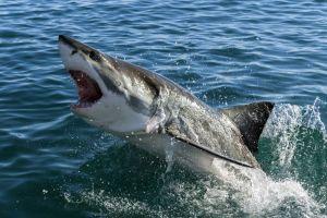 Tres ataques de tiburones en playa de Florida en menos de 72 horas