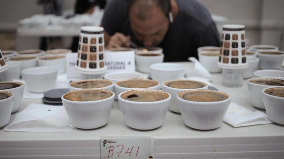 """El secreto del """"café más caro del mundo"""" que cuesta US$75 la taza (y la extraordinaria historia de la finca de Panamá en la que se produce)"""