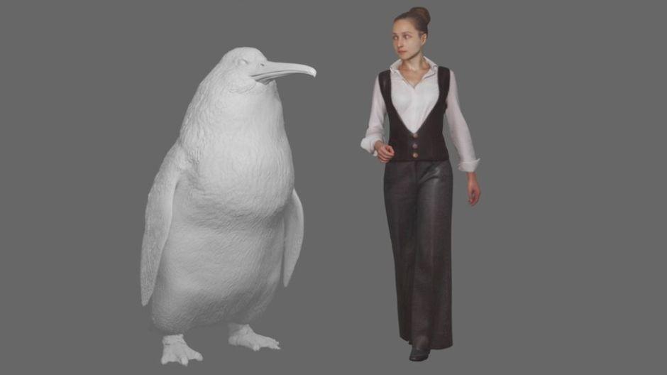 """Cómo era el """"pingüino monstruo"""" que alcanzaba tamaño humano y vivió hace millones de años en Nueva Zelanda"""
