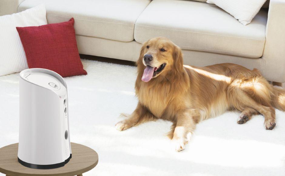 3 dispensadores de comida con cámara para vigilar la alimentación de tu perro mientras no estás en casa