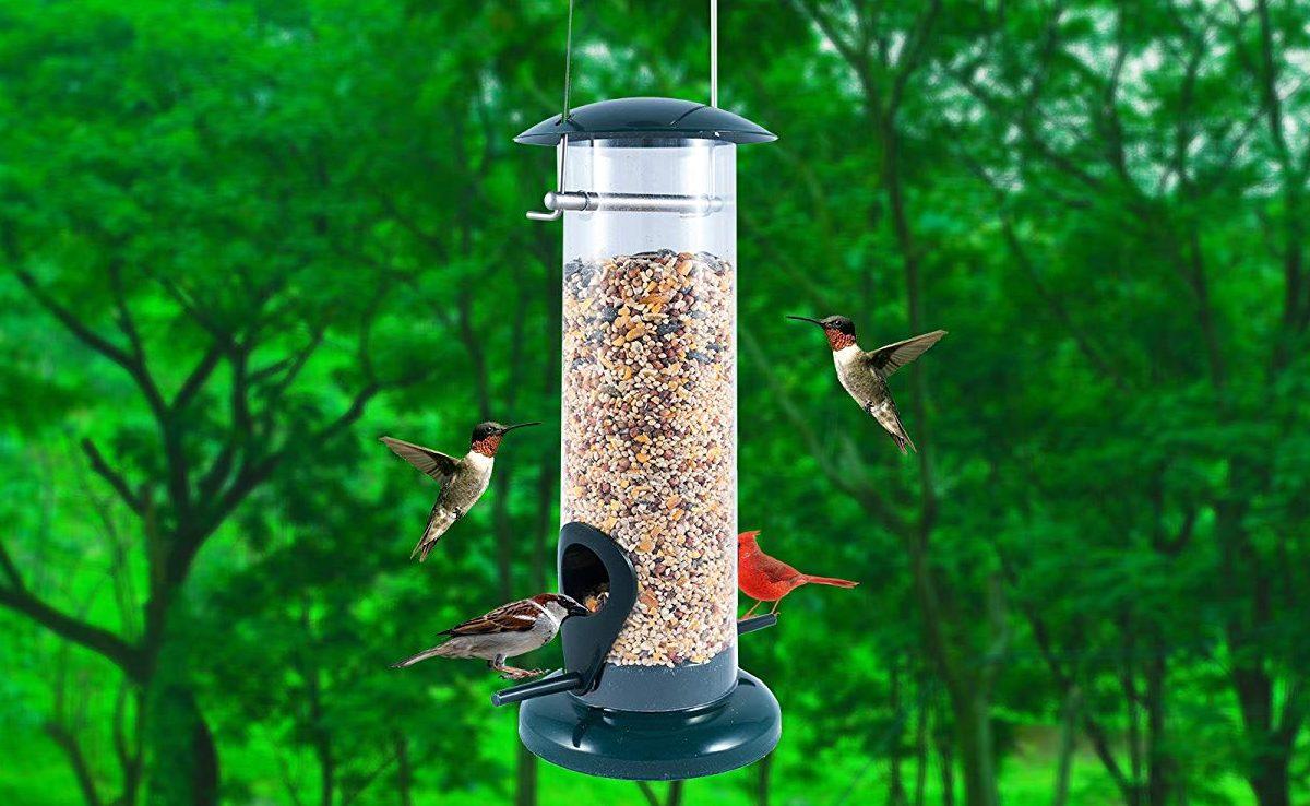 Los 5 mejores comederos de pájaros que puedes tener en tu patio