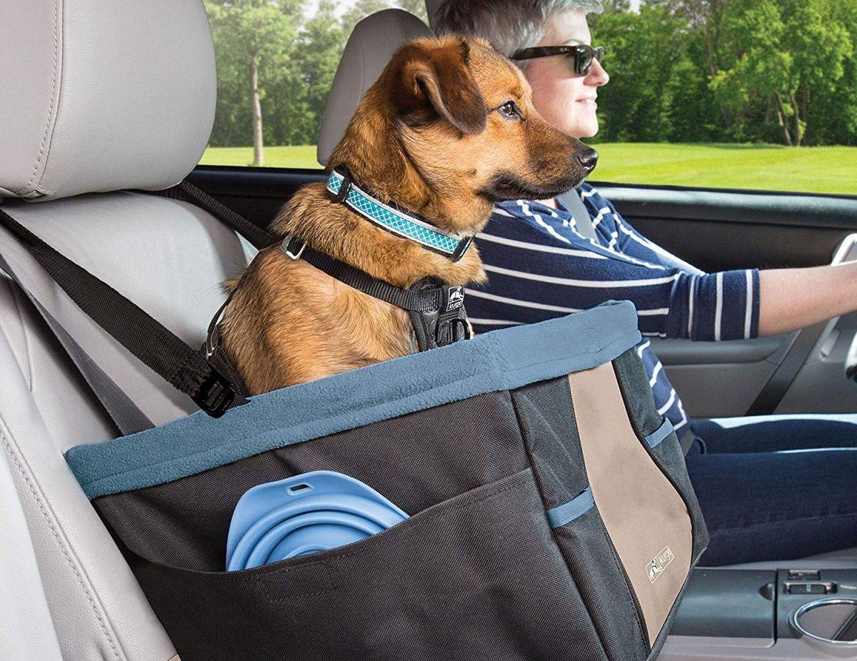 5 asientos de perros para tener en tu auto y que viajen seguros