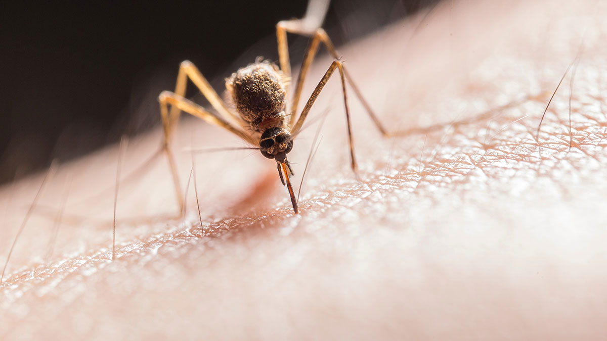 6 remedios caseros para aliviar la picadura de mosquitos